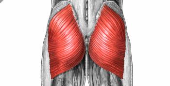 Bildresultat för gluteus
